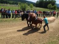 Prikaz snage konja i umijeća voditelja zaprega u vuči teških klada
