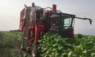Kombajni za berbu duhana bit će uvjet za opstanak proizvodnje