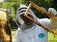 Pčelarima 14,8 milijuna kuna godišnje – Vlada usvojila Nacionalni pčelarski program